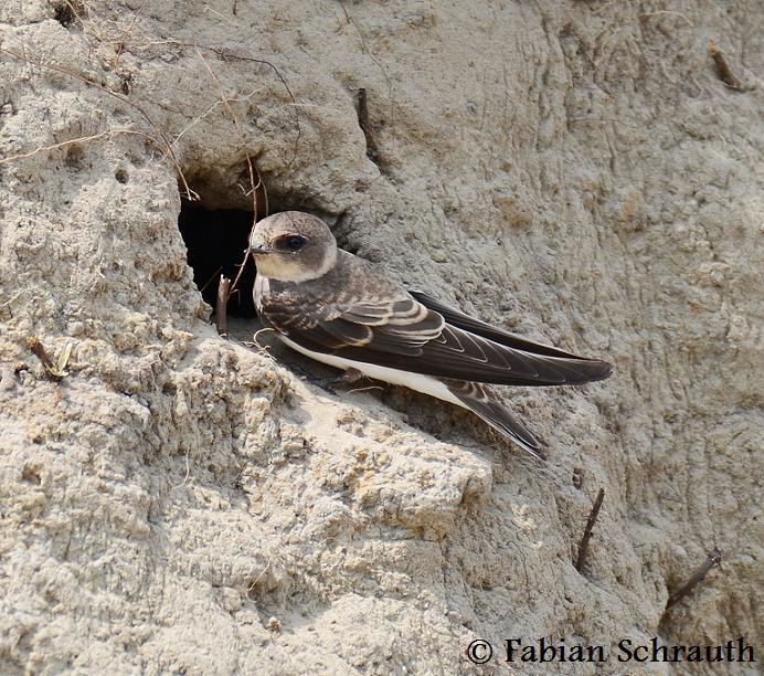 singvögel in deutschland übersicht